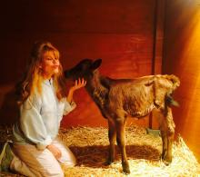 Charo and Manolito Farm Sanctuary ABC Celebrity Wife Swap Critical Blast